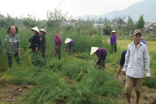 Kỳ Khang ra quân trồng cây chắn sóng dọc bờ biển