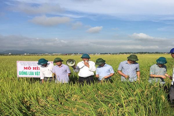 UBND huyện Kỳ Anh: Tham quan mô hình sản xuất lúa NA2, NA6 và triển khai một số nhiệm vụ sản xuất nông nghiệp trong thời gian tới.