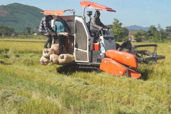 Bà con nông dân các địa phương tập trung thu hoạch lúa hè thu