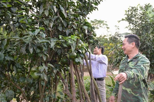 Vườn Cam V2 của gia đình ông Nguyễn Nhật Tân