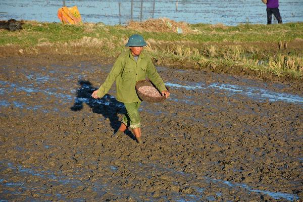 Huyện Kỳ Anh: Dồn sức hoàn thành gieo cấy vụ hè thu theo lịch thời vụ.