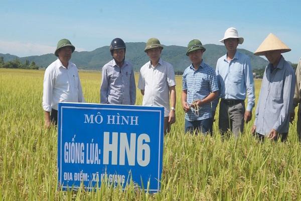 Các đại biểu tham quan giống lúa HN6  tại một số cánh đồng