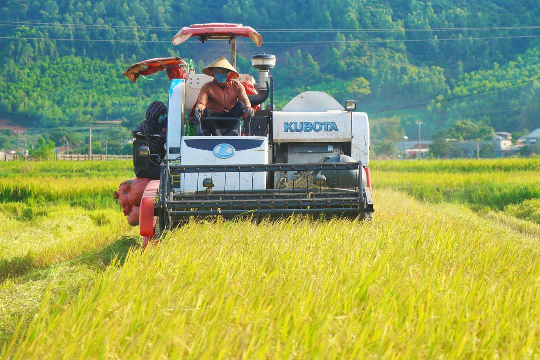 Kỳ Anh tập trung hoàn thành thu hoạch lúa hè thu, tránh mưa bão
