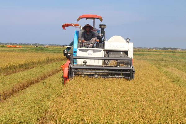 [Photo] Mùa Gặt