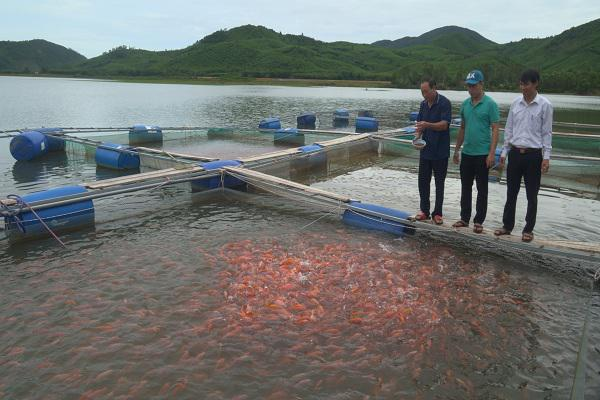 Mô hình nuôi cá lồng trên Hồ thủy lợi Ba khe của ông Hoàng Văn Quang ở xã Kỳ Bắc.