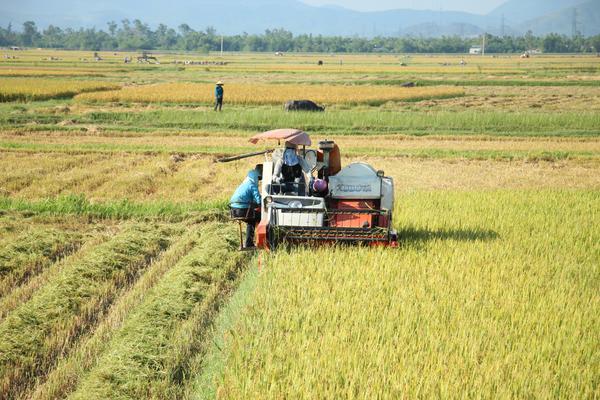 Cơ giới hóa trong thu hoạch lúa hè thu